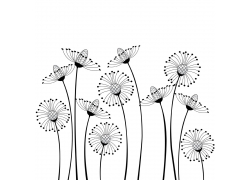蒲公英花朵插画图片