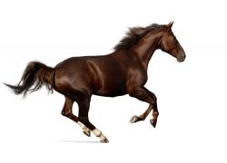 奔跑的烈马