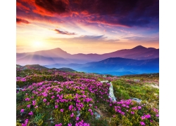 鲜花烂漫的山丘暮景