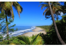 海边椰树和沙滩图片