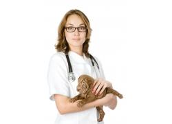抱着沙皮犬的外国女兽医