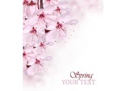 粉色樱花背景