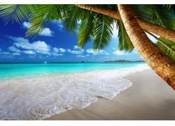沙滩椰树和海浪图片