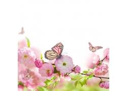 桃花上的蝴蝶