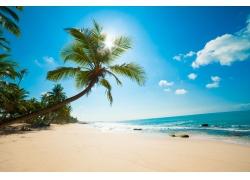 蓝天下的海边椰树和沙滩图片