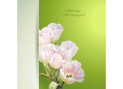 绿色背景与粉色花朵