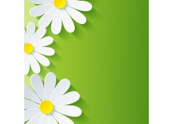 白色花朵和绿色背景