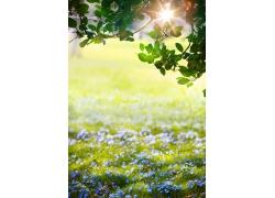 草地里的蓝色花朵