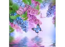 丁香花与蝴蝶