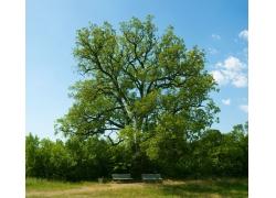 美丽春天树木椅子风景