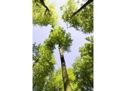春天树木风景