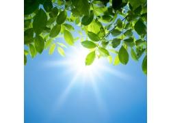 春天绿叶与阳光