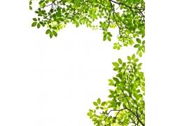 春天树叶背景
