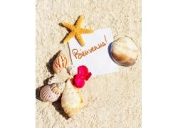 沙滩上的花朵与贝壳