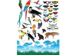 卡通鸟类昆虫动物插画图片