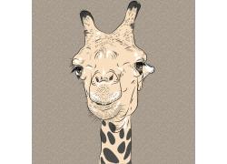 长颈鹿设计图片