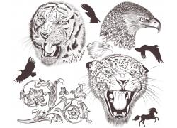 矢量鸟类动物插画图片
