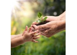 婴儿的手与大人手中的树苗