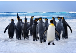 企鹅的正面与背面