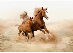 正在奔跑的大马与小马