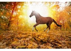树林中的棕色野马