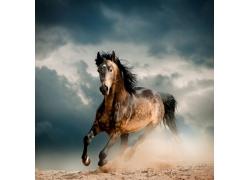 正在奔跑的马