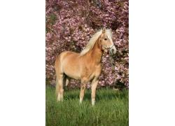草坪上的棕色的马