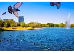 鸽子与水池风景
