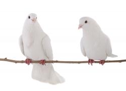站在树枝上的两只鸽子