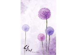 紫色蒲公英背景图片