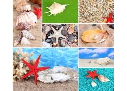 海星海螺贝壳珍珠