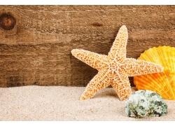 沙滩上的海星贝壳海螺