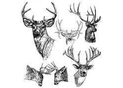 羚羊素描插图