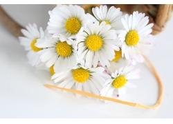 美丽雏菊花朵