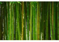 竹杆竹林摄影