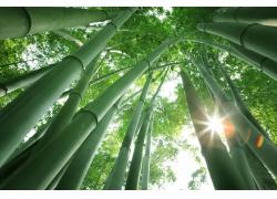 阳光照射的竹林