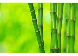 绿色竹子背景图片
