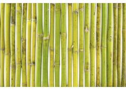 竹竿背景底纹