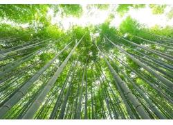 仰望竹子摄影