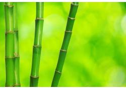 梦幻光斑与绿竹