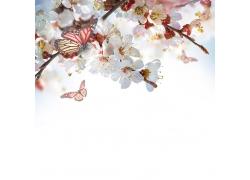 白色花朵与蝴蝶