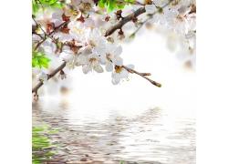 水面上的白色花朵