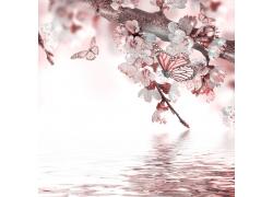 水面上的蝴蝶与花朵