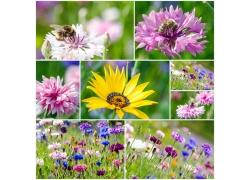 各种花朵摄影