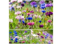 草地上的美丽花朵