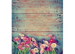 木板上摆放的花朵