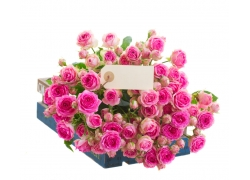 玫瑰花里的卡片
