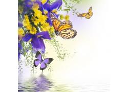 紫色花朵与蝴蝶