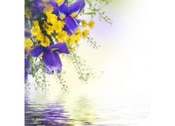 水面上方的花朵