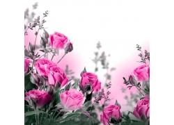粉色花朵摄影